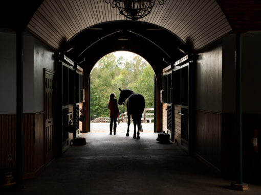 Dressage Equine Photography – Laurie