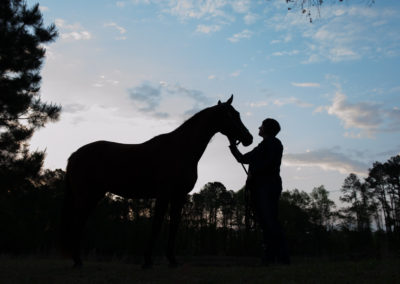 Equine Photography Sunrise